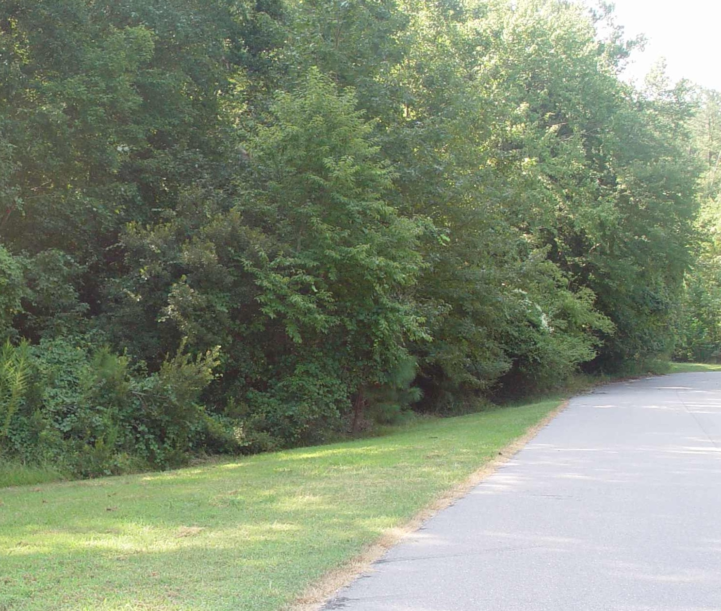 Wooded area near my house