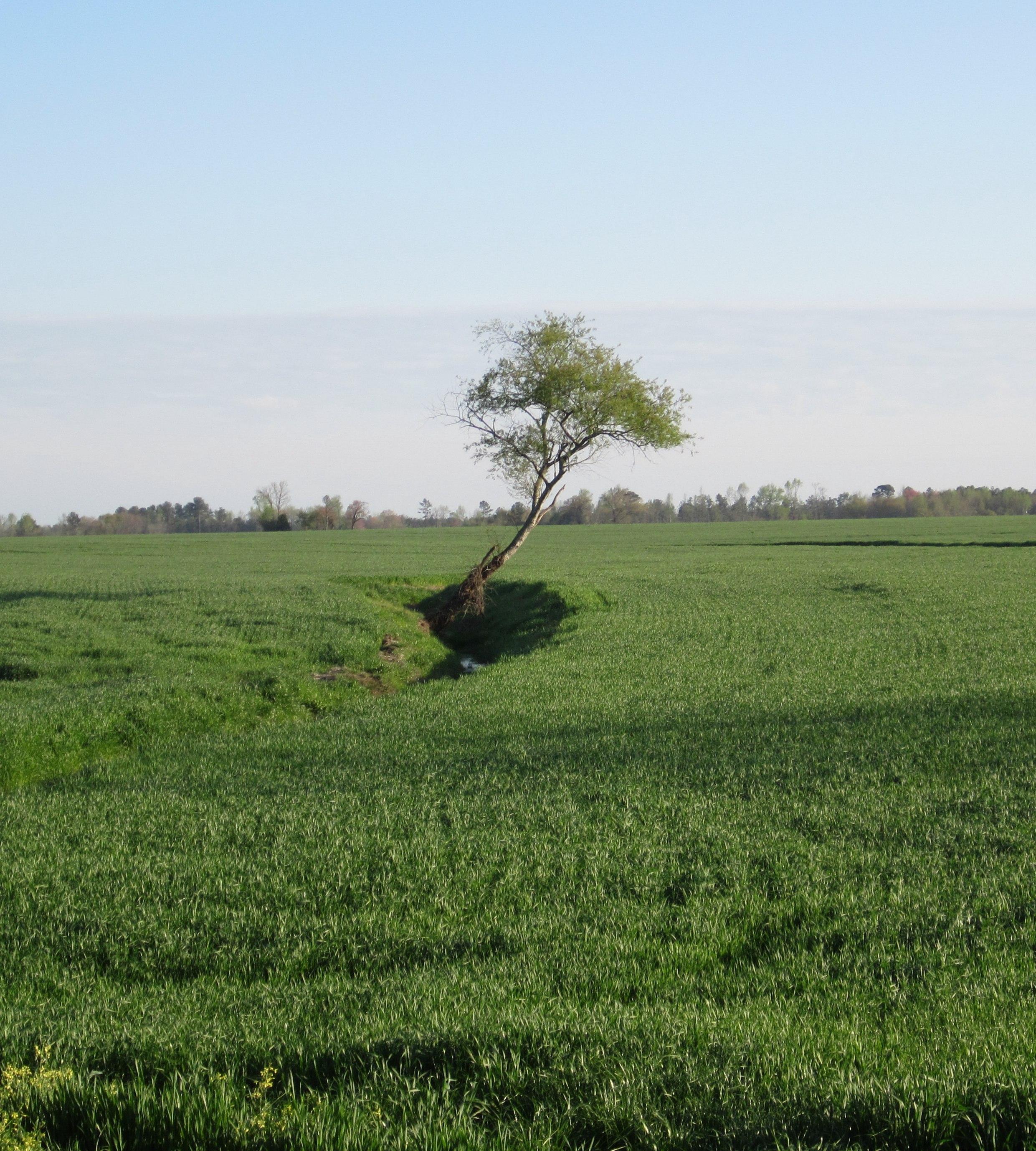 persistent tree